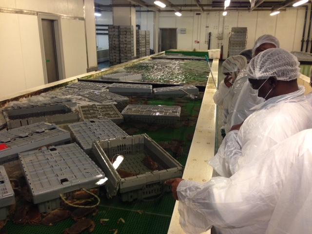 Dalla Tanzania una delegazione per scoprire la filiera ittica veneta